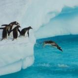 『VIXが31を超えたら「ファーストペンギン」になろう!リスクと引き換えに大きな先行者利益が得られる。』の画像