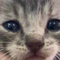 子ネコはお腹が減っていた。ミルクがなければお前の指を食ってやるぅ! → 萌獣、危険です…