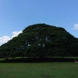 『この木なんの樹、気になる木♪』の画像