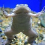『カエル』の画像