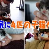 """『【ビデオ】""""4兄弟の赤ちゃんニャンコを坂上家が預かる!預かりさん#2""""』の画像"""
