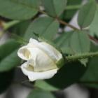『残暑ますます厳しく、モグラが住む庭で来年の花壇の準備。』の画像