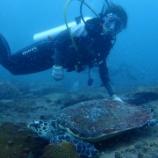 『ダイビングライセンス取得しました~アドバンス海洋講習2日目~』の画像