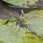 治水緑地の野鳥日記