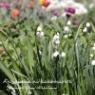 【ガーデニング】花で味わう海外旅行の気分♪