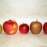 『木村秋則さんの無農薬・無肥料栽培のりんご5種を食べ比べ』の画像