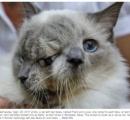 【画像】 顔が二つある奇形ネコ、12年生きるも癌で安楽死