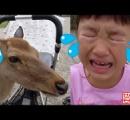 ユーチューブで再生回数一位の日本語動画が意外すぎると話題に