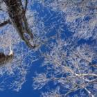 『日本百名山 冬の赤城山へ☆その1 やっぱりあおぞらがいいネ!!』の画像
