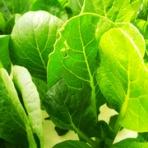 野菜作り失敗の傾向と対策