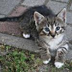 野良猫保護した結果wwwwwwwwwwww