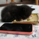 『真っ黒子猫ちゃん・プルーンいかが?』の画像