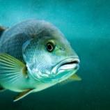 『魚にも恋愛感情があると判明した』の画像