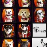 『2013-9-27のわんちゃん達です。』の画像
