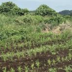 サカ隊長の無農薬で育てるインコ餌栽培の軌跡!
