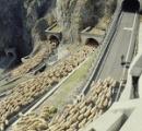 【動画】羊飼いが居眠りをしているあいだにヒツジ1000頭が脱走し町に押し寄せる。スペイン