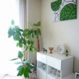 『【インテリア】大きめの観葉植物がある部屋の参考画像集【実例】 2/3 【インテリアまとめ・インテリアブログ 人気 】』の画像
