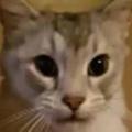 ネコがこっちを見上げていた。撫でてみる。ねぇねぇ、もっと♪ → 猫はこうする…