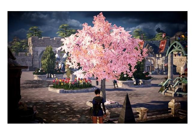 【黒い砂漠モバイル】桜の苗木の入手方法