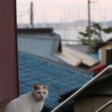 『江ノ島』の画像