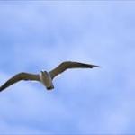 鳥人間コンテスト。ルール上可能な最長飛行距離60kmをあっさり達成した東大出身の会社員をご覧ください