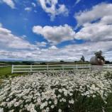 『【北海道ひとり旅】富良野・美瑛の旅『新栄の丘展望公園』牧草ロールが印象的な展望公園』の画像