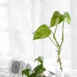 『ガラスの花瓶のお手入れ方法 & グリーンのある暮らし』の画像