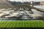 農家さんによってスタンスもいろいろ!交野で稲作の準備始まったみたい!