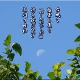 『草刈り三昧』の画像