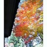 『まだ残る紅葉』の画像