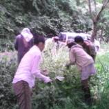 『薬草採りに行きました』の画像