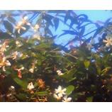 『煌めく朝』の画像