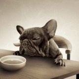 ワイ「この唐揚げ美味…あっ!」→床に落とす→犬「ヌッ」食う→翌日・・・