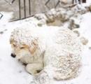 アメリカ人「元々野生やし毛皮着とるし平気やろ」 寒波なのに外で飼ってる犬を放置し大量に凍死