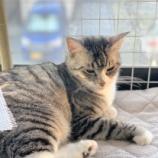 『きょうのいちまい・猫は学習する』の画像