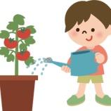 『トマトの水やり問題!!』の画像