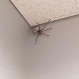 『【虫注意】がんばれデカくて速い蜘蛛』の画像