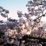 『お花見シーズンやん❤』の画像