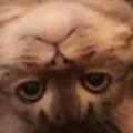 うちのネコがソファでくつろいでいた。何か問題でも? → 猫はさっきからこんな感じ…