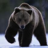 『俺が昔山で遭難した時に熊に助けられた話』の画像