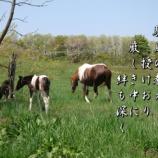 『駿馬の教え』の画像