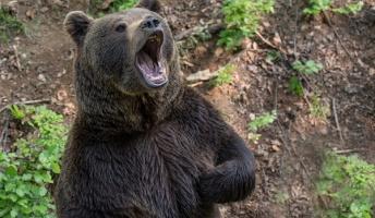 【危険】登山してて目の前にヒグマ居たらどうするの?