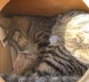 【大吉画像】お寺でおみくじ引こうとしたら中で猫が寝てたんだが…