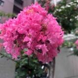 『【朝のご挨拶】今日も埼玉県は熱中症警戒日。ところで、本日からお盆ですが、お盆の過ごし方について個人的な話をさせてください。』の画像