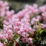 『「逢花打花」イワカガミ 』の画像
