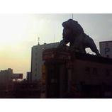 『ビルの上のライオン』の画像