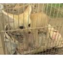 【タイ】空港で荷物からキツネなど見つかり…日本人の男逮捕