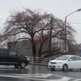 『わが家の桜10 4』の画像