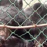 『ワンさんの犬が実は熊さんだった』の画像
