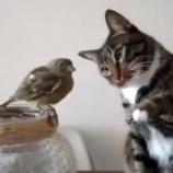 『ネコの意外な一面「小鳥さん、触ってもいい???」そ~と触るネコが可愛すぎる』の画像
